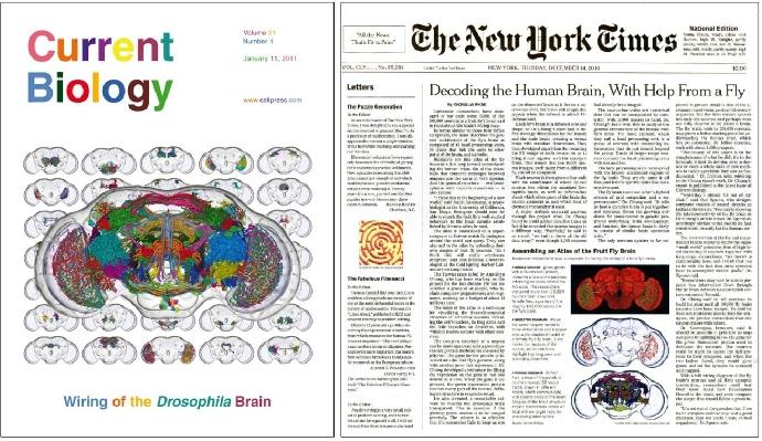 物理新知:解碼大腦—理論物理學家能做些什麼?